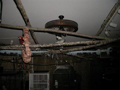 3rd Album of  Past Parrots Rescues in our Sanctuary