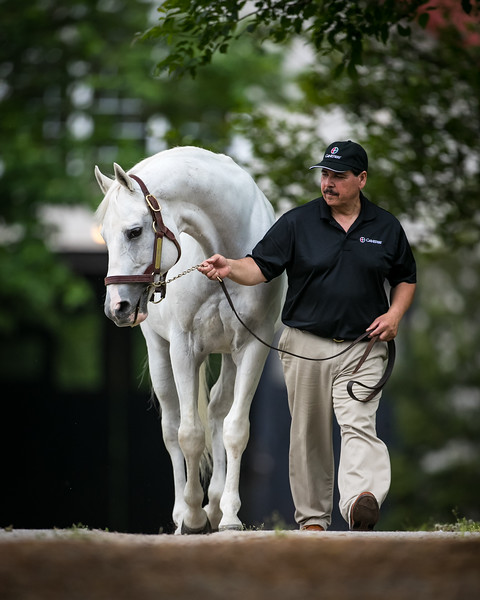 Tapit at Gainesway on 5.28.21
