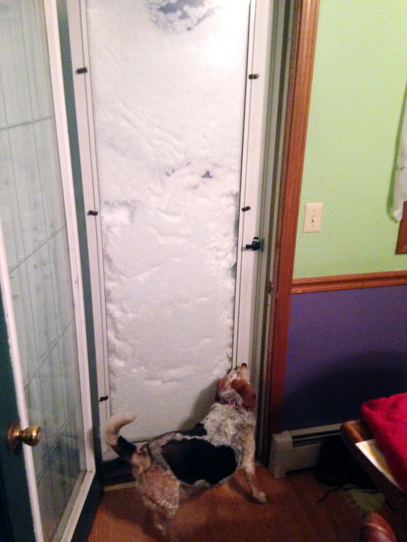 . In this photo provided by Patrick Bryne, his dog, Bonnie, sniffs a door  blocked with snow on Tuesday, Nov. 18, 2014, in South Buffalo, N.Y. A lake-effect snowstorm dumped more than 4 feet of snow on the Buffalo area on Tuesday. (AP Photo/Patrick Bryne)