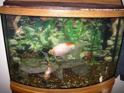 Covey tank