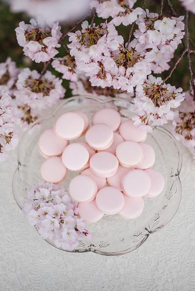 Cherry Blossoms (133 of 182).jpg