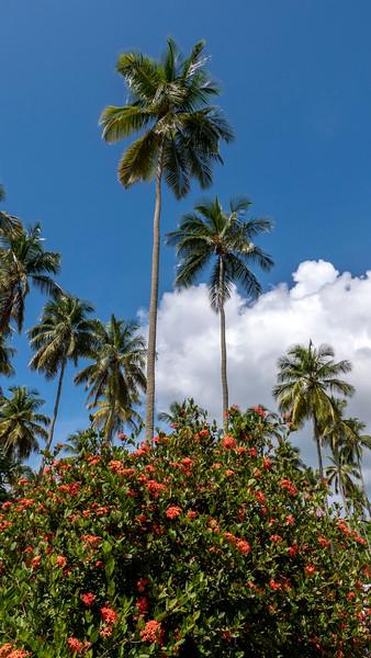 Saint-Lucia-Island-Routes-Catamaran-Tour-13.jpg