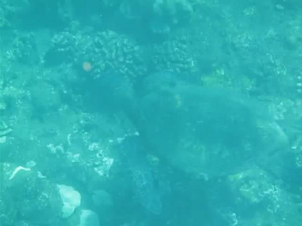 Maui_101117_0290.MOV