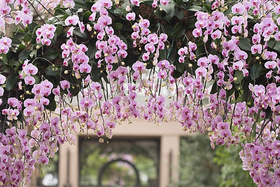 Longwood Garden Orchid Extravaganza-2017
