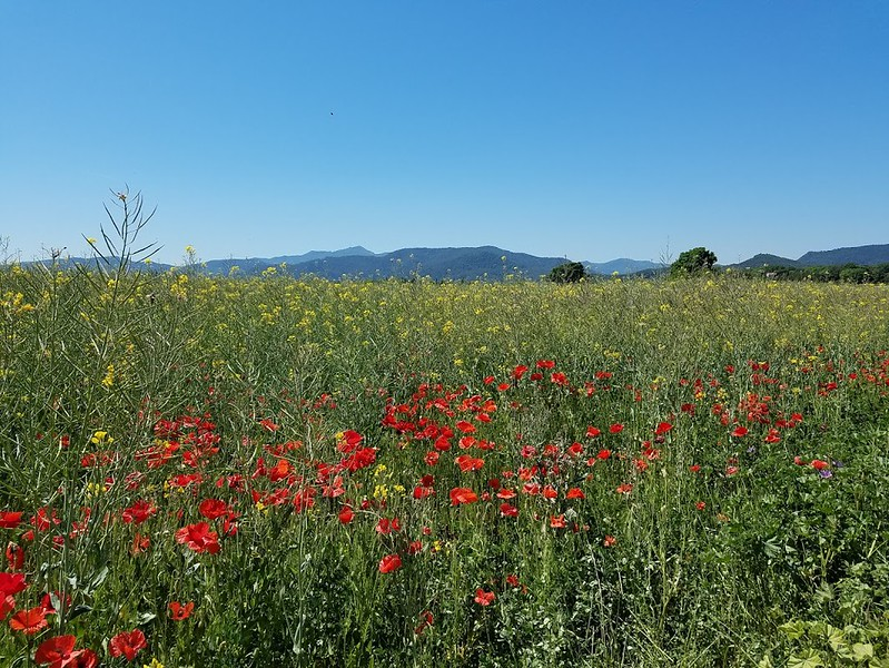 colorful field.jpg