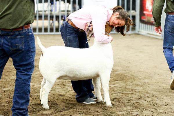 JABGA Breeding Showmanship