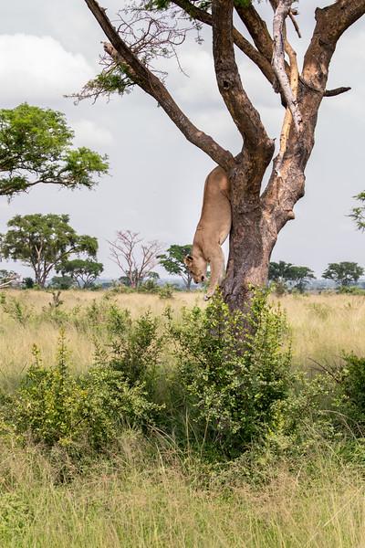 Uganda_T_QE-1543.jpg