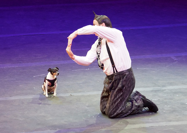 January 2014- Ringling Brothers and Barnum & Bailey Circus