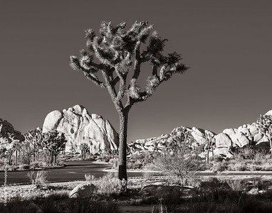Palm Springs and Joshua Tree