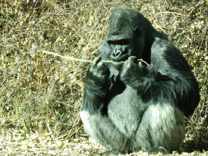 Denver Zoo 2019 (1358).JPG