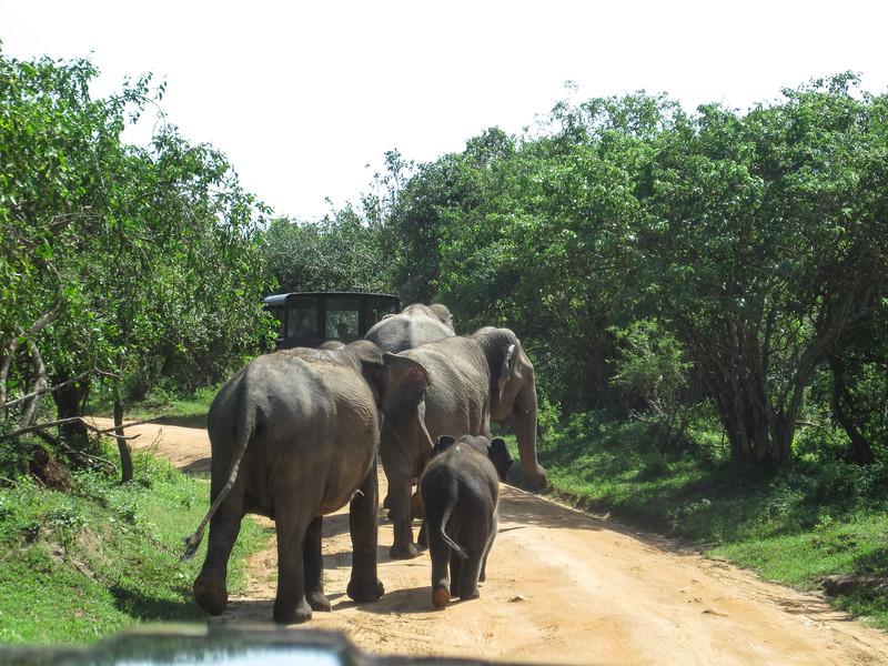 Sri_Lanka17-9835.jpg
