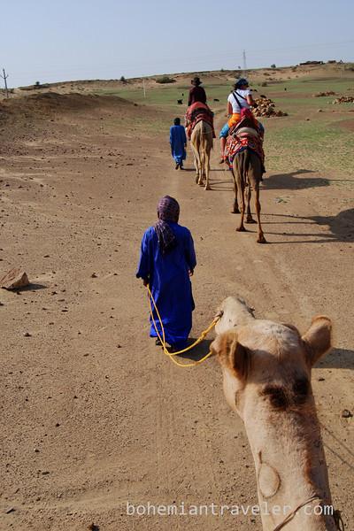 rajasthan camel train.jpg