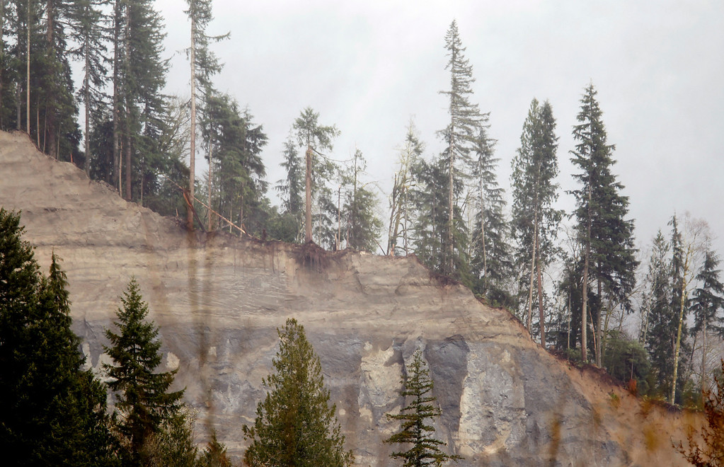 . Trees stand on the edge of a massive, deadly mudslide, Thursday, March 27, 2014, in Oso, Wash.  (AP Photo/The Herald, Mark Mulligan, Pool)