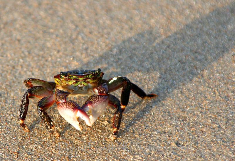 19 Crab.jpg