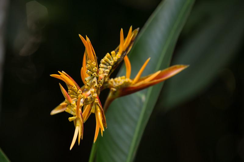 brazilian_flowers-_MG_1651-140307.jpg