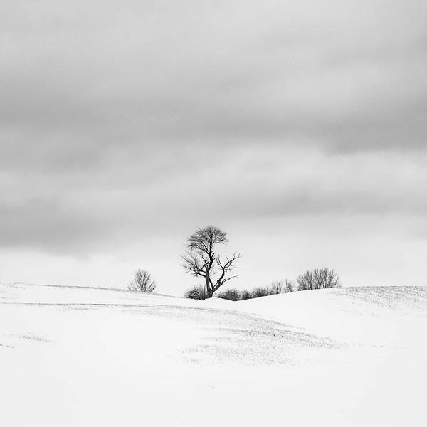 wisconsin snowfields