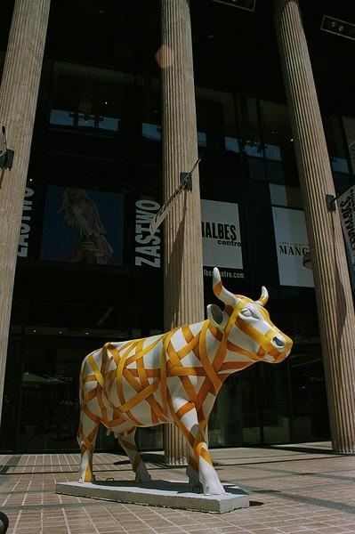 Vaca en cinta_3