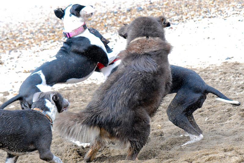 dogs_beach-025.jpg