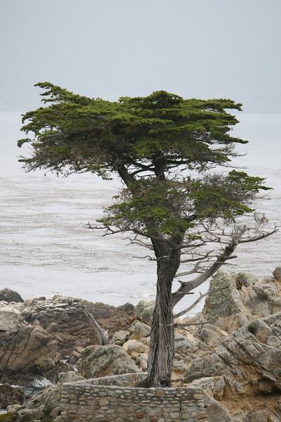 Monterey Peninsula: 17 Mile Drive