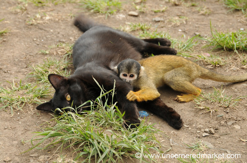 Cat and Monkey Wrestling - Day 3 of Salkantay Trek, Peru