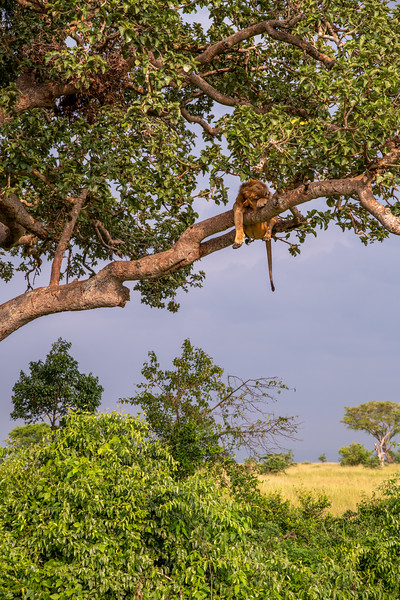 Uganda_T_QE-1722.jpg
