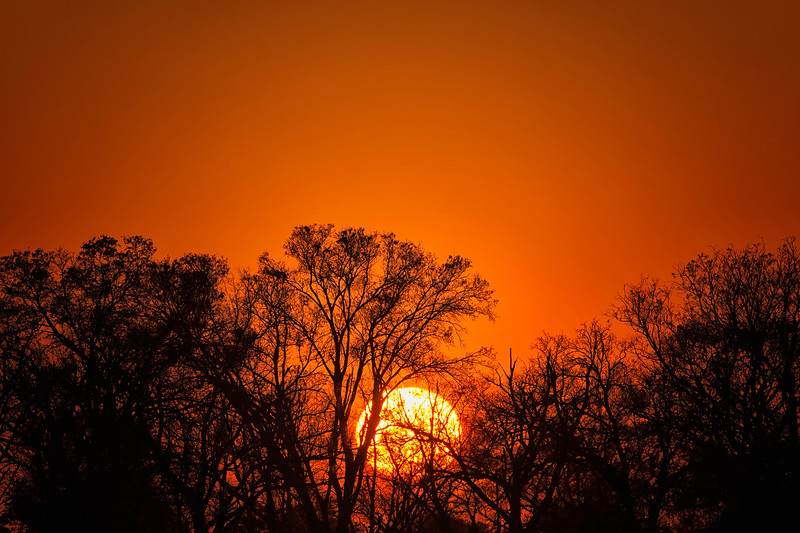 2014-08Aug13-Okavango-740-Edit-Edit-Edit-Edit.jpg