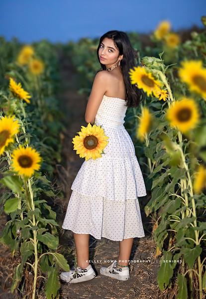 Sunflower 1738.jpg