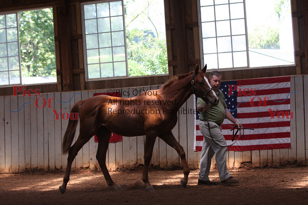 American Warmblood Society (AWS) Inspection at Willow Hill 8-15-09 (Gordonsville, VA)