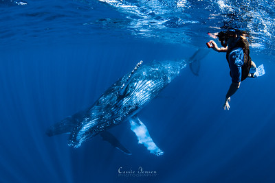 Swimming with Whales Tour!