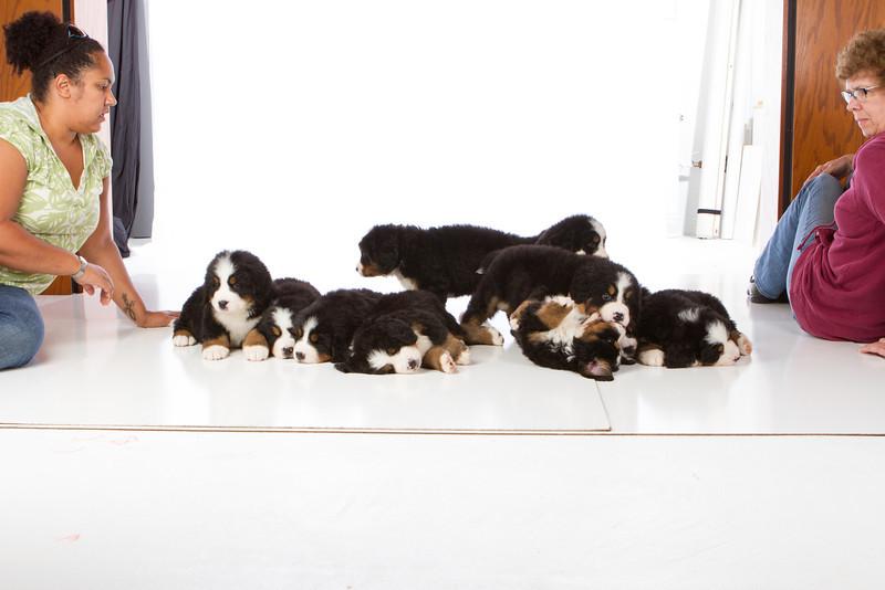 2013-Pearson Pups-Jun02-0491.jpg