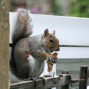 2020 07 24 Squirrel