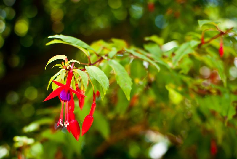 Valdivia 201201 Jardin Botanico (27).jpg