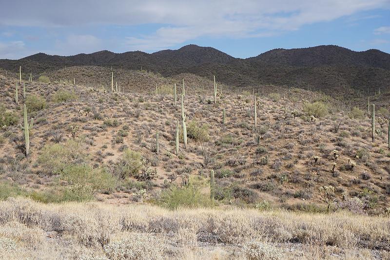 arizona-a1.jpg
