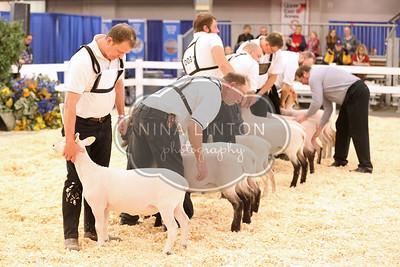 2017 RAWF Market Lamb Show Candids