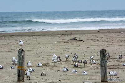 2016/09/27 Mustang Island Beach