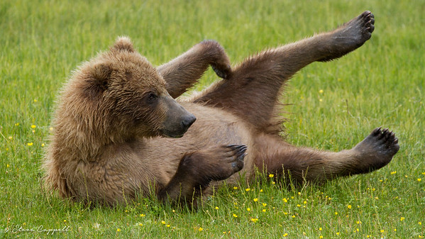 Alaska Photos