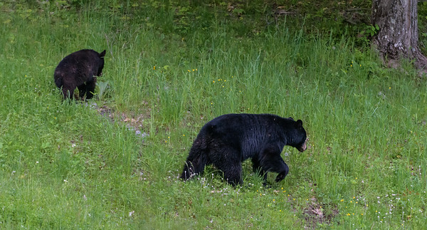 Seaver Hill Bears