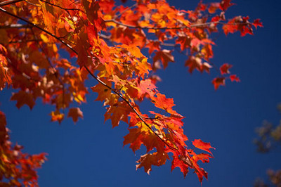 Chronicle readers' fall photos 3