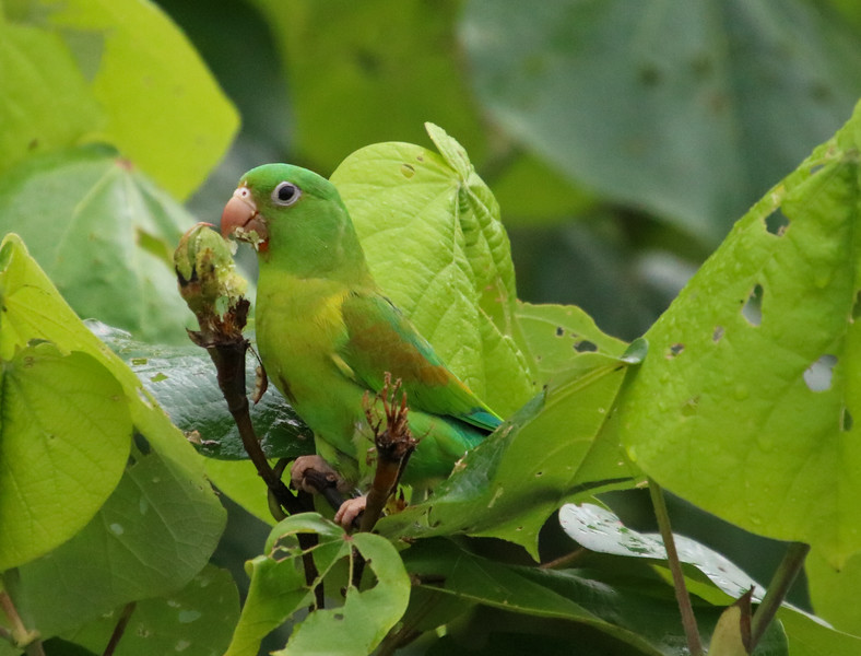 green parrot on branch