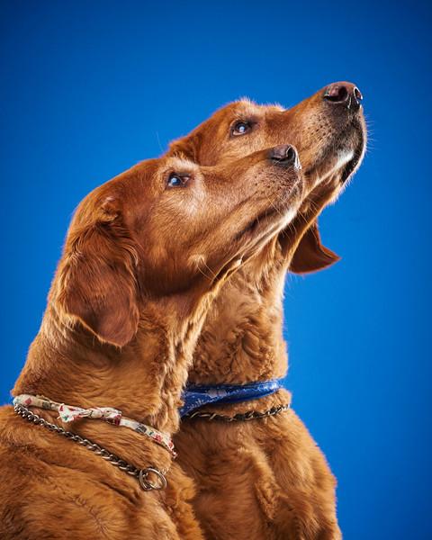 2016_12_24_Christmas Dogs4121 1 1.jpg
