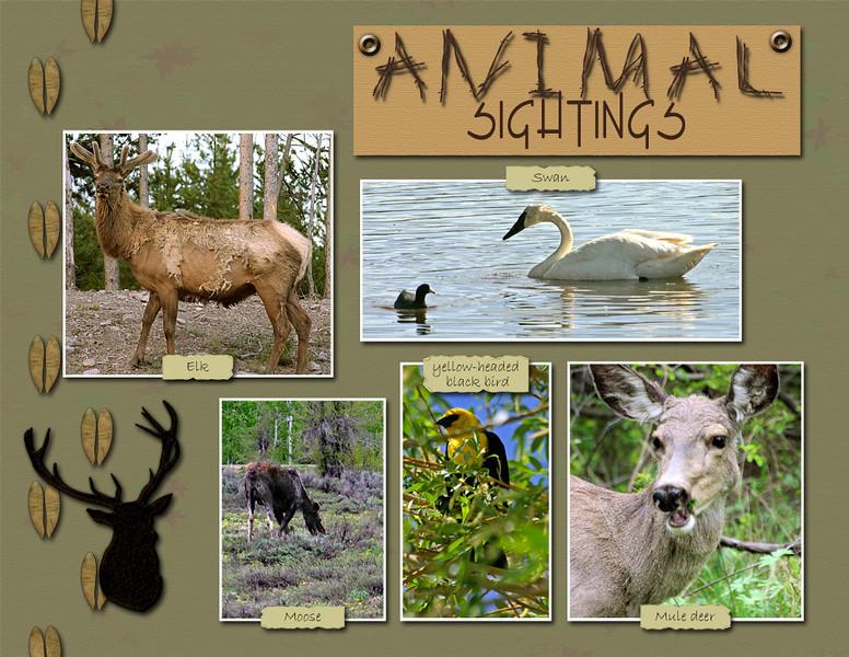 20-animals-1.jpg