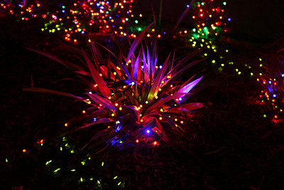 Point Defiance Zoo Lights - 2009