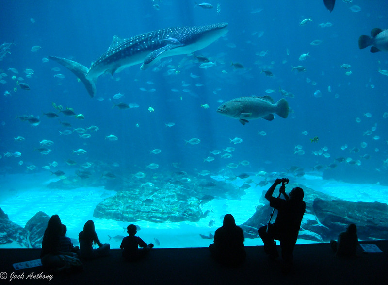 The Atlanta Aquarium