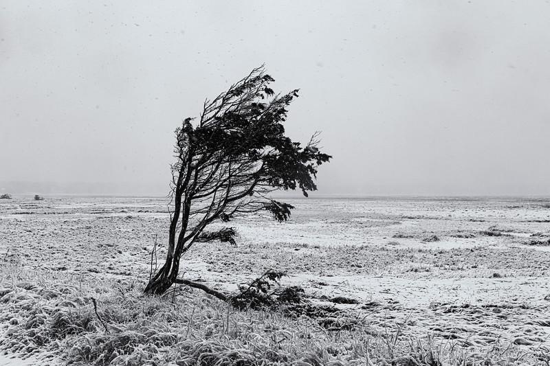 2021_02_Cape cod snow20210207-3M3A9749-Edit.jpg