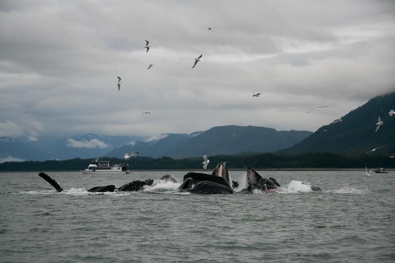 Alaska 2009-368.jpg