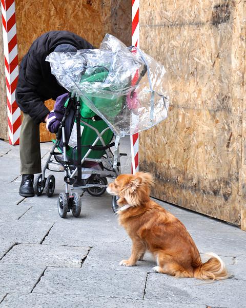 Siena 2013 - 004.jpg