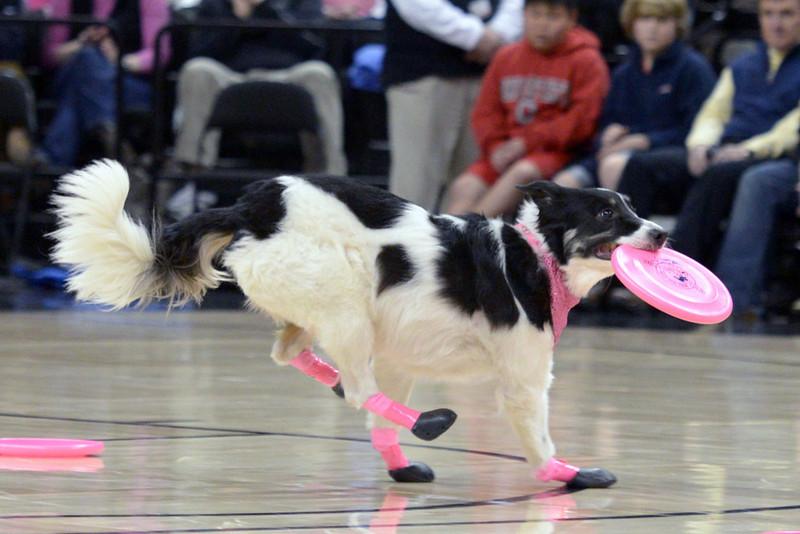 Frisbee dogs 17.jpg