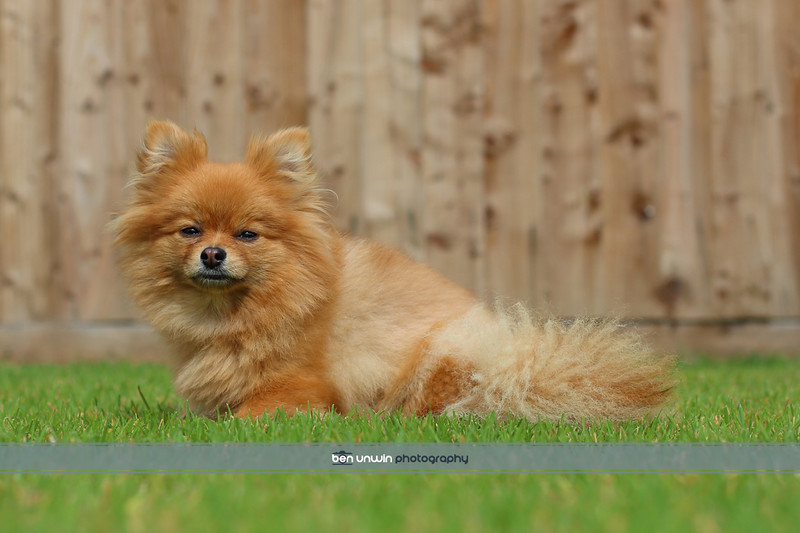 pet-photography-north-west-002.jpg