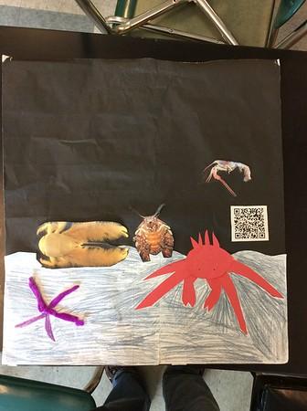 2018 June Ocean Organisms
