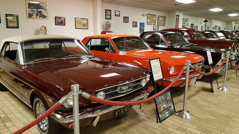 DonGarlitz Mustangs.jpg